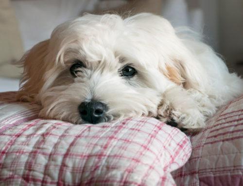 בני הזוג התגרשו – מי יקבל את בעלי החיים?