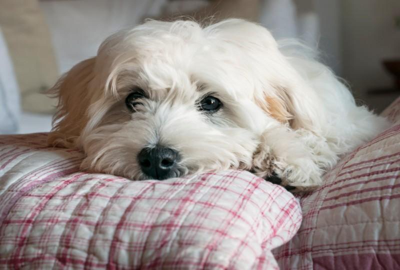 כלב שלא ברור מי מבעליו הגרושים יקבל אותו